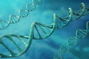 Un premier essai chez l'homme d'une thérapie génique dans la myopathie myotubulaire