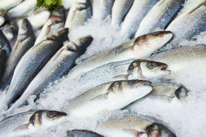 Fos-sur-mer : de la dioxine dans le boeuf et du plomb dans le poisson