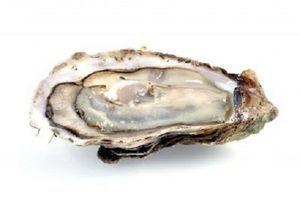 Etudier l'huître pour mieux comprendre le développement des cancers