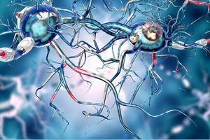 Japon : des cellules souches iPS transplantées dans le cerveau d'un patient atteint de Parkinson