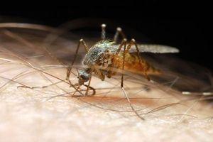 La présence de moustiques tigre détectée à Paris et à Créteil