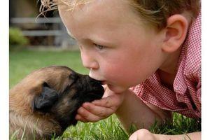 Les chiens protègeraient les bébés de certaines infections