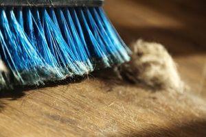 Les poussières de nos maisons regorgent de microbes !