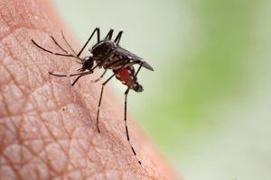 Virus Usutu : premier cas d'infection détecté en France