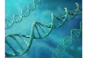Notre génome n'a pas livré tous ses secrets