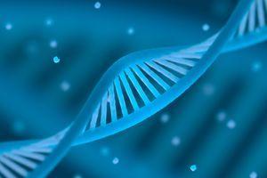 Les Etats-Unis autorisent la première thérapie génique d'une maladie neuromusculaire