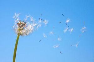 Alerte pollens : toujours plus de vigilance pour les patients allergiques