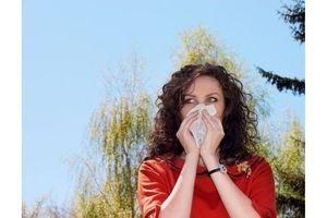 Pollens d'ambroisie : alerte rouge pour quatre départements