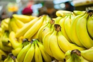 Une banane OGM, dopée à la vitamine A, à l'essai aux États-Unis