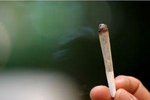 Une étude nuance la dangerosité de la consommation de marijuana