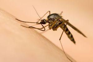 Zika : 150 experts demandent le report ou le déplacement des jeux Olympiques de Rio