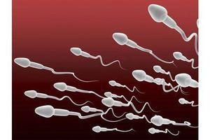La qualité du sperme différente d'une région à l'autre
