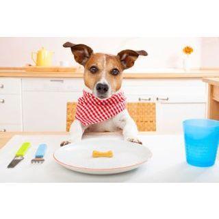 besoins nutritionnels du chien