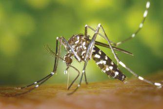 La combinaison gagnante pour venir à bout du moustique-tigre