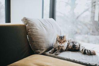 """Les secrets des """"chats centenaires"""""""