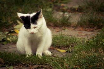 Les troubles du comportement du chat
