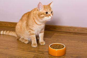 Mon chat ne mange plus. Comment réagir ?
