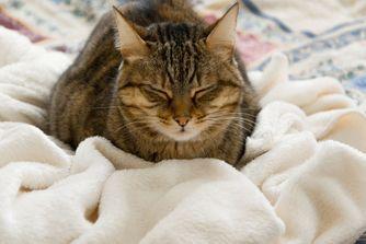 Mon chat tousse ou éternue. Comment réagir ?