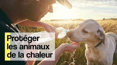 proteger animaux canicule