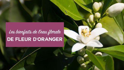 bienfaits eau florale de fleur d'oranger