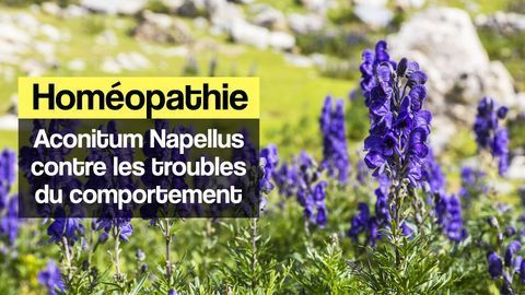 Aconitum Napellus homeopathie