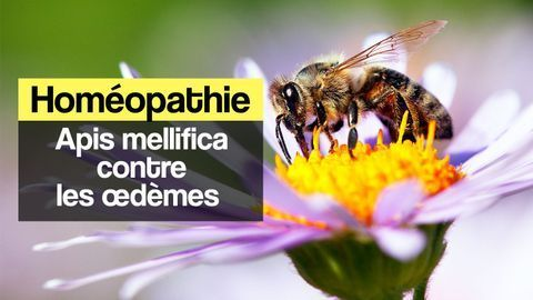 Homéopathie apis mellifica