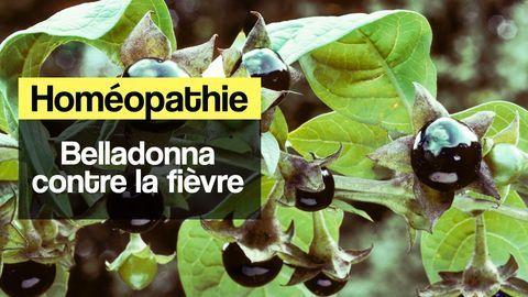 belladonna homéopathie