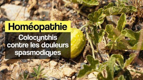 colocynthis homéopathie