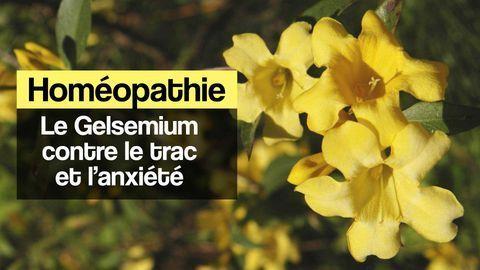 homéopathie gelsemium