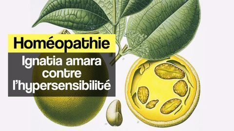 Homéopathie ignatia amara