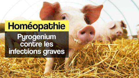 pyrogenium homeopathie