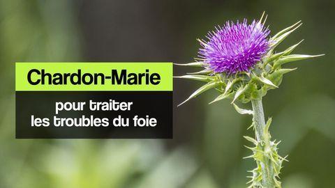 chardon-Marie foie