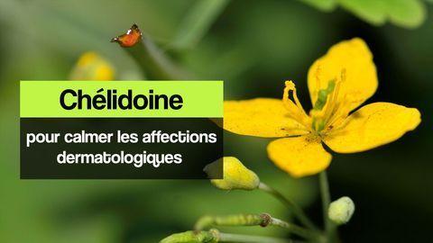 chelidoine peau