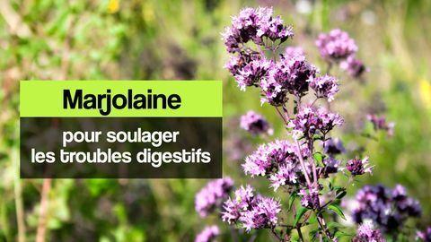 marjolaine digestion