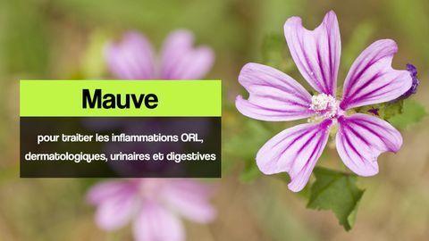 mauve inflammations