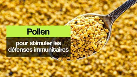pollen défenses immunitaires