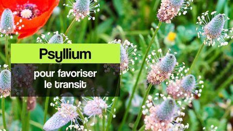 psyllium transit