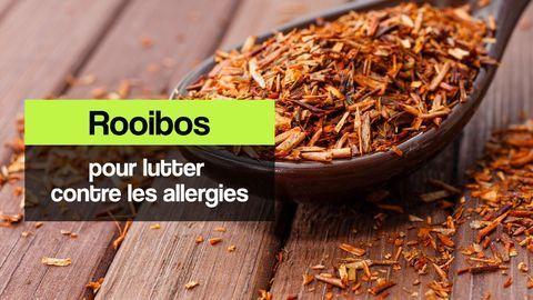 rooibos allergies
