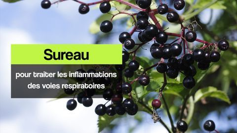 sureau infections respiratoires