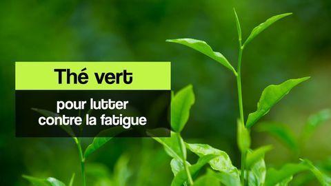 thé vert fatigue