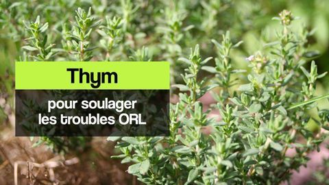 thym troubles orl