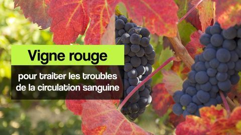 vigne rouge circulation sanguine