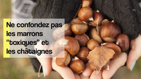 différence marrons chataignes