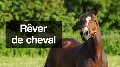 rever de cheval interpretation