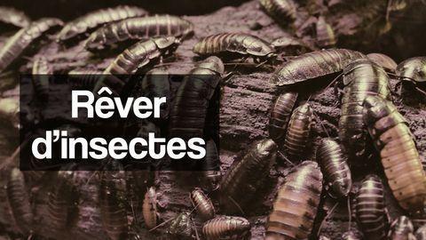 rêver d'insectes