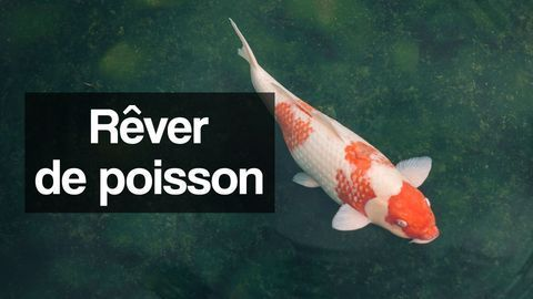rêver de poisson