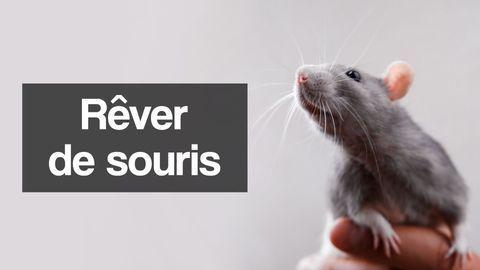 rever de souris interpretation