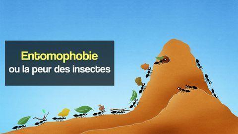 entomophobie ou la peur des insectes