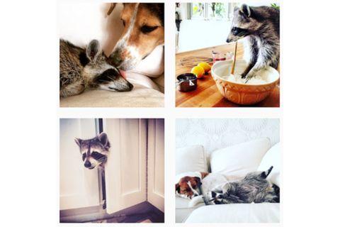 20 animaux stars à suivre sur Instagram