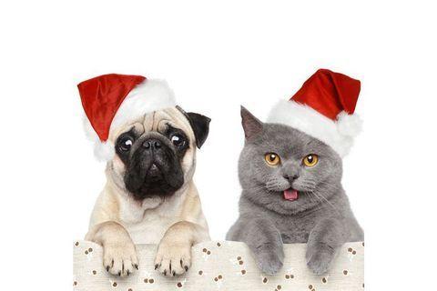 Vos petites bêtes aussi ont le droit à un cadeau !